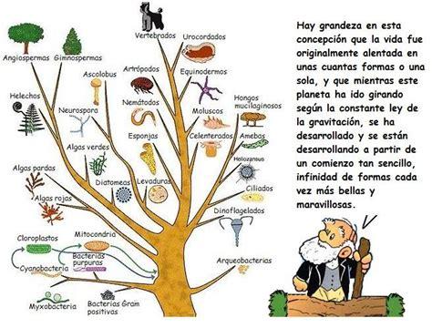 biologia: ACTIVIDAD EVOLUCIÒN DE LOS SERES VIVOS