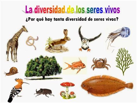 Biología al Límite.: Diversidad de los seres vivos