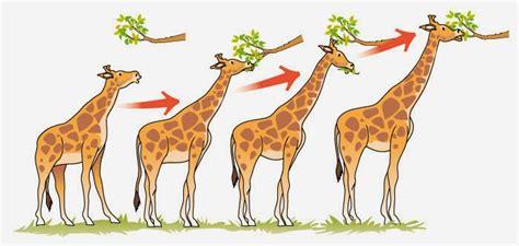 biología básica : ¿Que es una adaptación?