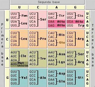 BIOLOGIA: Código Genético