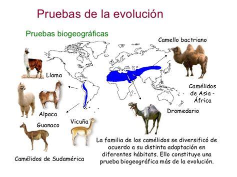 Biología del Picasso: EVIDENCIAS DE LA EVOLUCIÓN