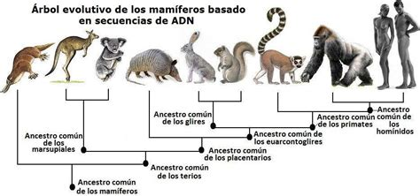 Biología: EVOLUCIÓN   ADAPTACIÓN