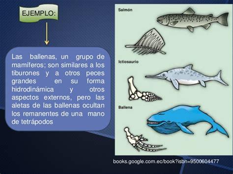 Biología: Evolución Convergente