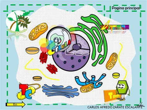 Biología I mapas mentales