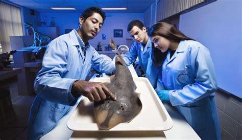 Biología marina: Qué es, carrera, campo laboral y más.