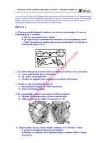Biologia Selectividad Examen Resuelto Canarias 3 Www ...