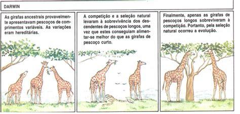 Biologia : TEORIAS EVOLUCIONISTA DE DARWIN E LAMARCK