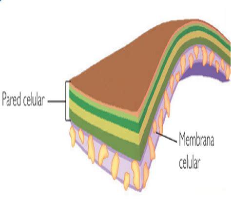 Biologia V: Estructura y funciones celulares.