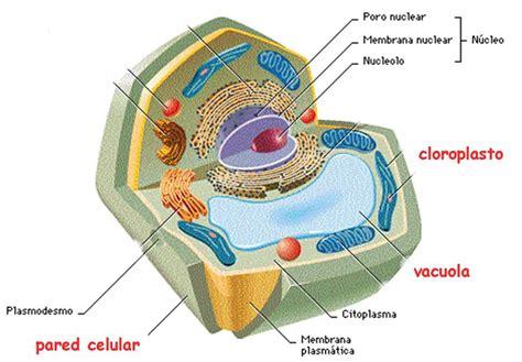 Biología Vegetal: Unidad II:Estructura y función de la ...