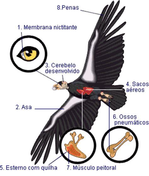 Biologia Viva: Reino Animalia Cordatas