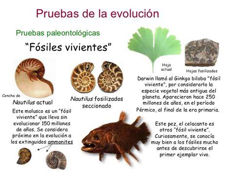 Biología y Geología en el IES Valle de Leiva: Pruebas ...