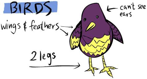 Biology: Characteristics of Aves