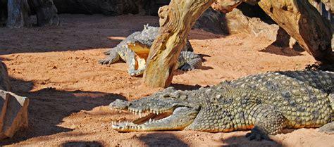 BIOPARC AYUDA A LOS ANIMALES A COMBATIR EL FRIO | Oconowocc