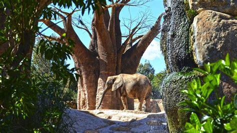 Bioparc cumple 10 años con 5 millones de visitantes y 335 ...