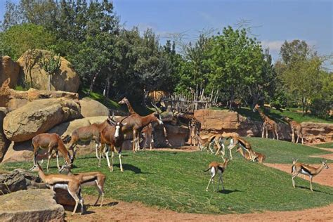 Bioparc: descubriendo la fauna de África desde Valencia   Blog