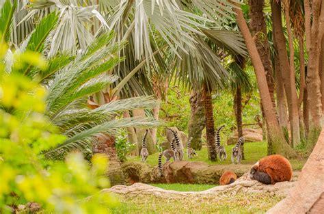 Bioparc Fuengirola celebra el día mundial del primate ...