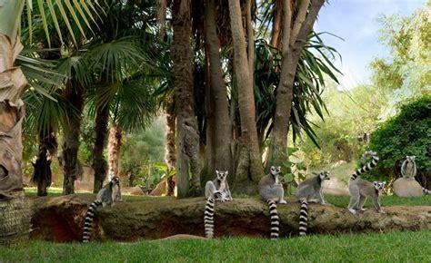 Bioparc Fuengirola como modelo de los zoos modernos ...