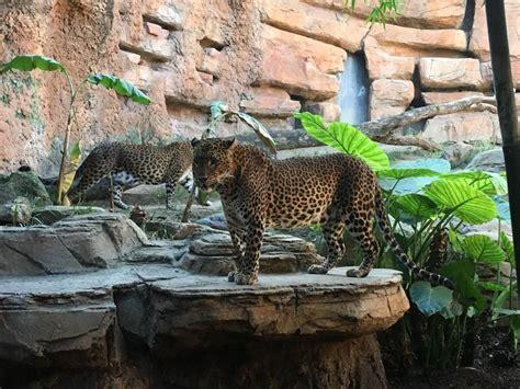 Bioparc Fuengirola | Hábitat natural, Zoo, Zoologico