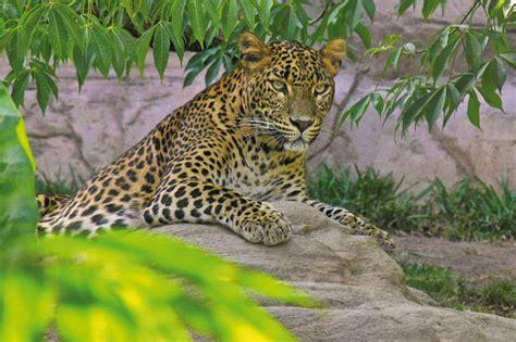 Bioparc Fuengirola: mucho más que un zoo