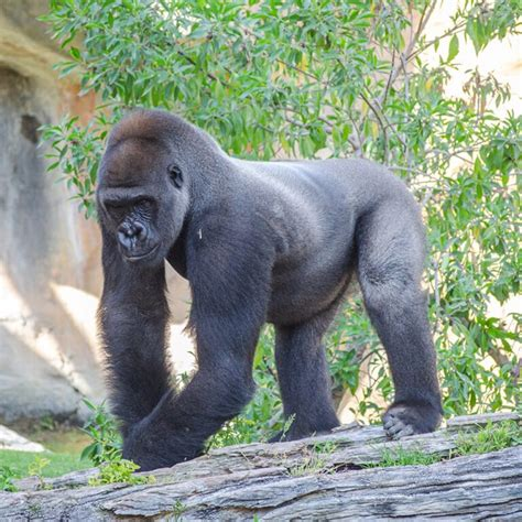 Bioparc Fuengirola. Parque de animales en la Costa del Sol ...