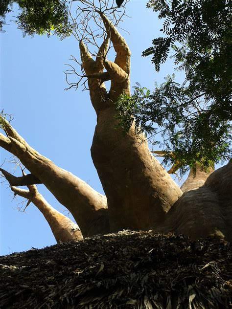 Bioparc, Fuengirola. | Photo, Tree, Places