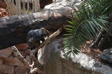 BIOPARC Fuengirola recrea ruinas de un templo  perdido  en ...