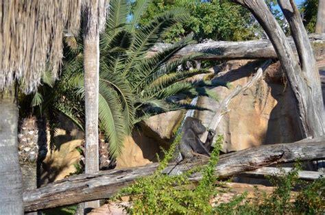 Bioparc Fuengirola transforma instalaciones de gorilas y ...
