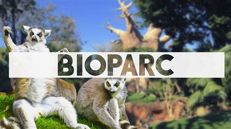 Bioparc Fuengirola, where the animals live in a recreation ...
