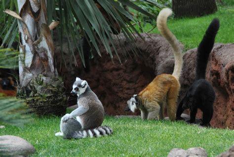 Bioparc   Fuengirola Zoo   euro t guide   Spain   What to ...