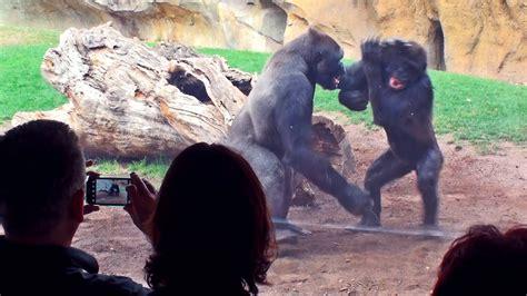 BIOPARC, parque / zoo de Valencia   Video de animales ...