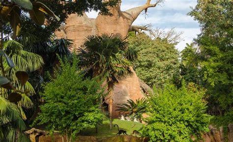 BIOPARC rinde homenaje a las  damas de los grandes simios ...