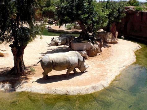 BIOPARC  VALENCIA    Animalier, Parc