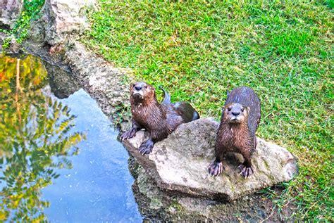 BIOPARC Valencia, centro de conservación de especies – 140 ...