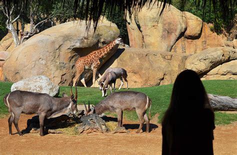 Bioparc Valencia, de nuevo uno de los 10 mejores parques ...