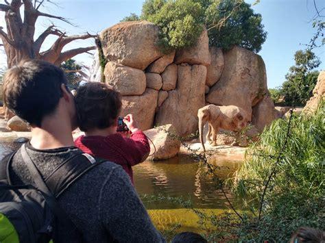 Bioparc Valencia: opiniones de nuestra experiencia con niños