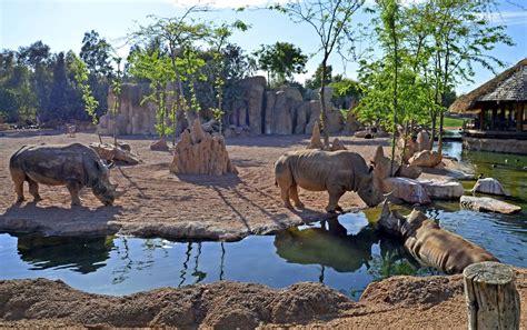 Bioparc Valencia Sabana africana rinocerontes en el agua ...