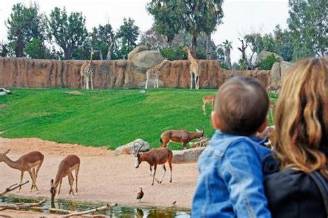 Bioparc Valencia, un nuevo concepto de parque de animales ...
