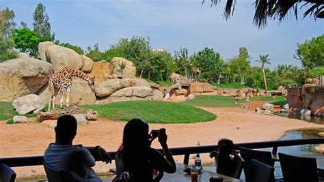 Bioparc Valencia: un zoológico de nueva generación