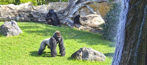 BIOPARC Valencia   Uno de los mejores parques de animales ...