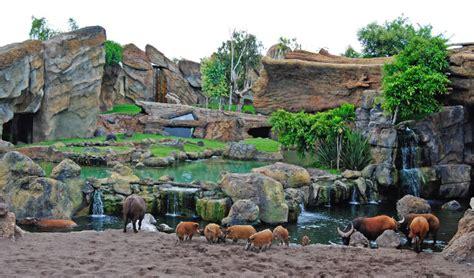 BIOPARC Valencia y la conservación de animales