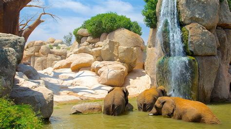 Bioparc Valencia Zoo Pictures: View Photos & Images of ...
