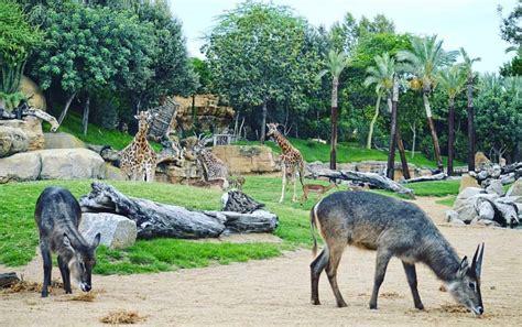 Bioparc | Zoo, Animals, Aquarium