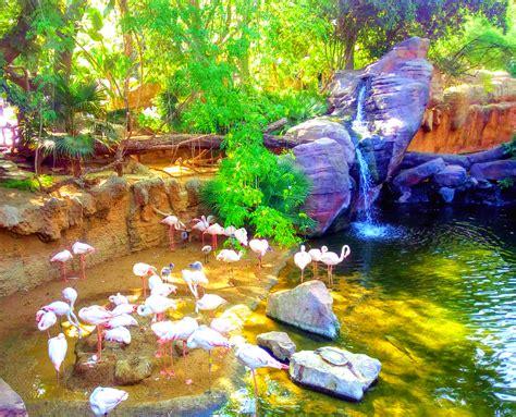 Bioparc zoo Fuengirola   Hola Hub Malaga