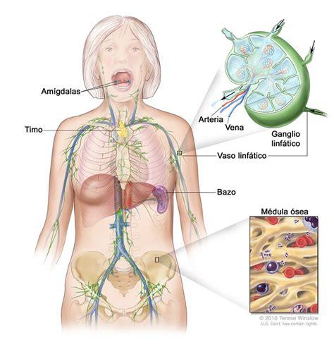 Biopsia de ganglio linfático centinela   National Cancer ...