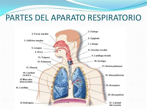Biopsicología Tema: Aparato circulatorio Sistema ...