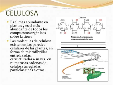 Bioquimica completo