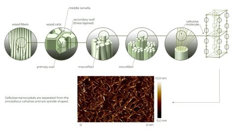 Biorrefinerías de nanocelulosa – Un biomaterial con ...