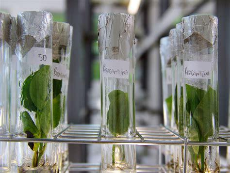 Biotecnologia beneficia produção, meio ambiente e agricultores