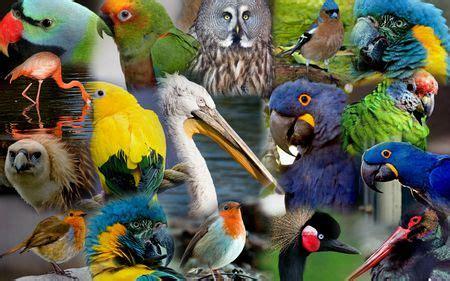 BIRD COLLAGE   zoo, birds, blue, parrots | Chester zoo, Zoo