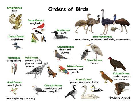 Bird Groups  Orders